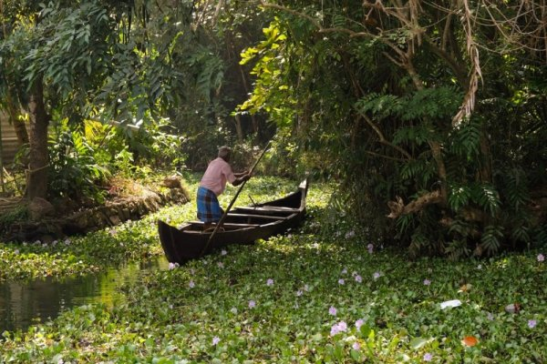 On the Kumarakom Backwaters, Kerala