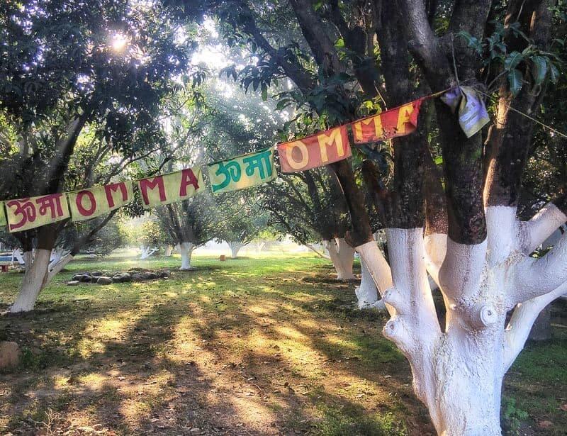 Aurovalley Ashram mango trees