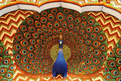 India national bird peacock
