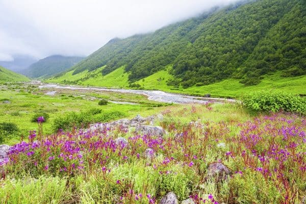 Valley of Flowers, Himachal Pradesh, is one of the best places to visit inIndia