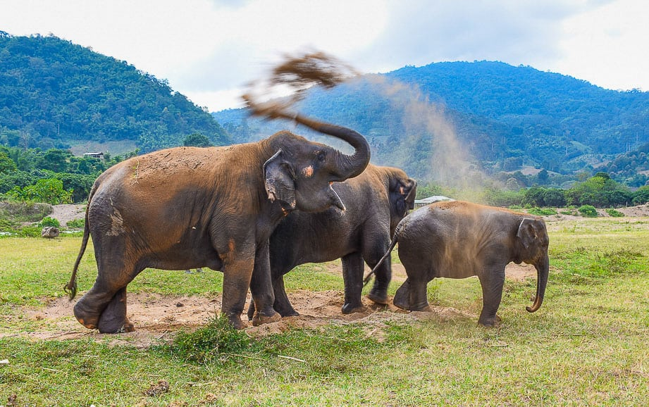 elephants at sanctuary in Thailand