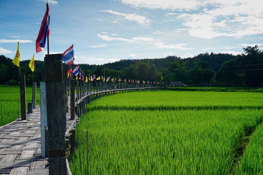 Rice oaddie in Thailand