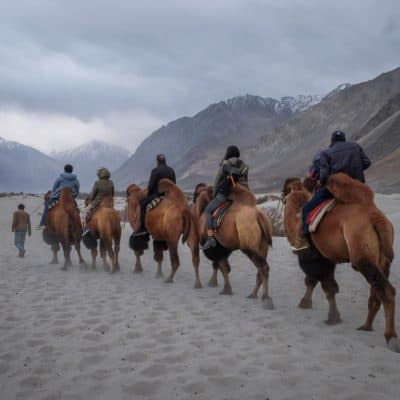 People riding camels in Ladakh