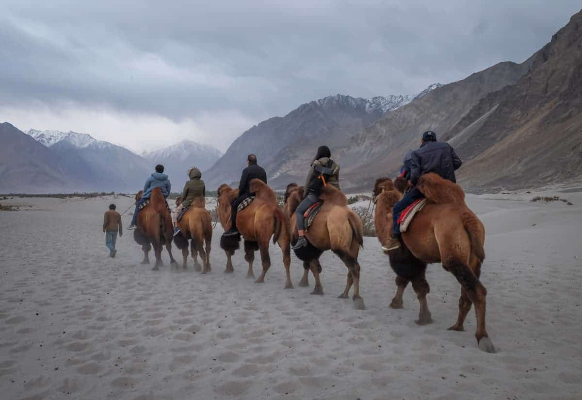 People riding camels on Ladakh trip