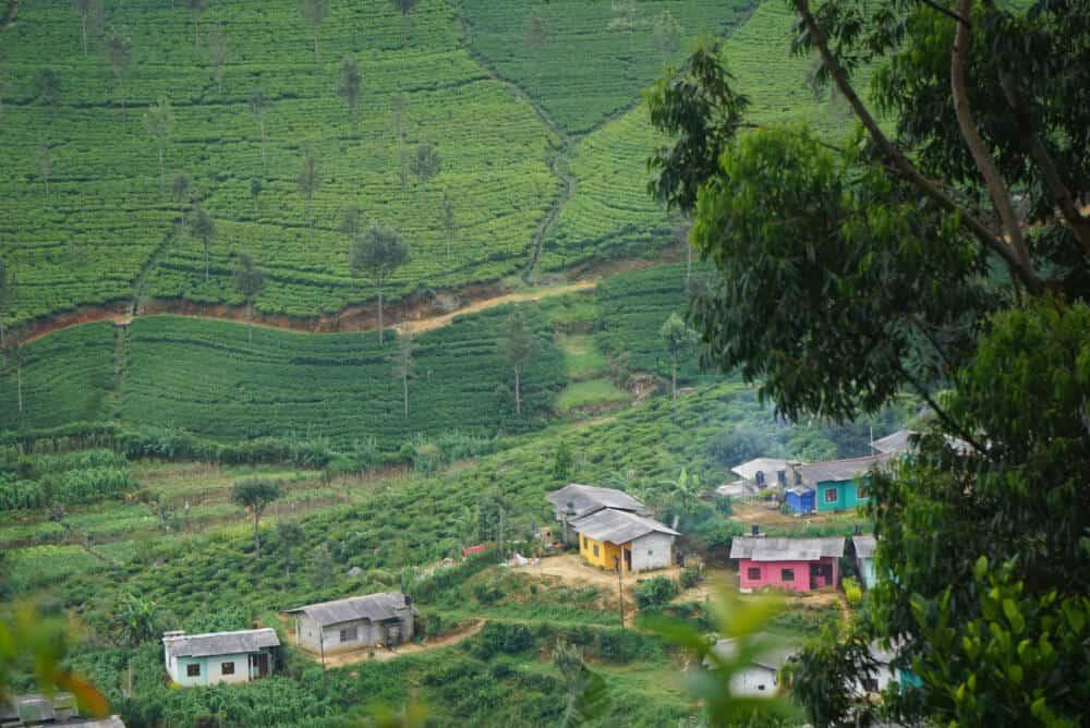 houses and paddy fields at Haputale Sri Lanka