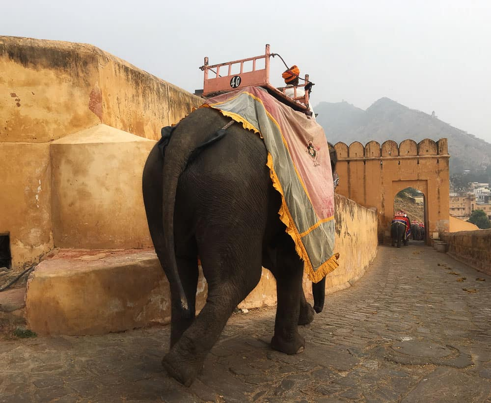 elephant walking up the ramp at Amber Fort, Jaipur, Rajasthan