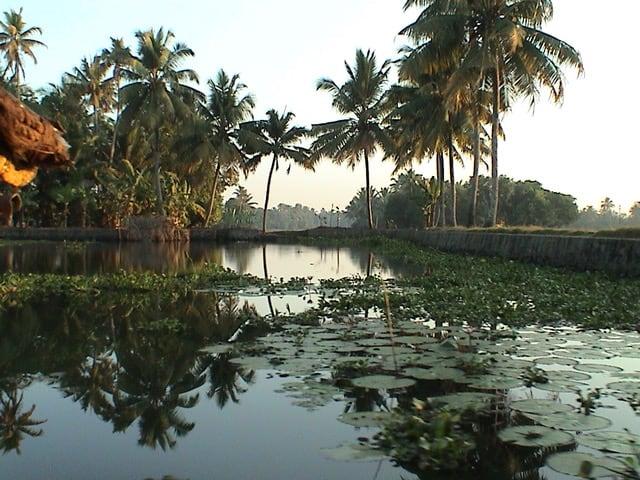 The backwaters of Kerala, at Kumarakom Lake Resort,