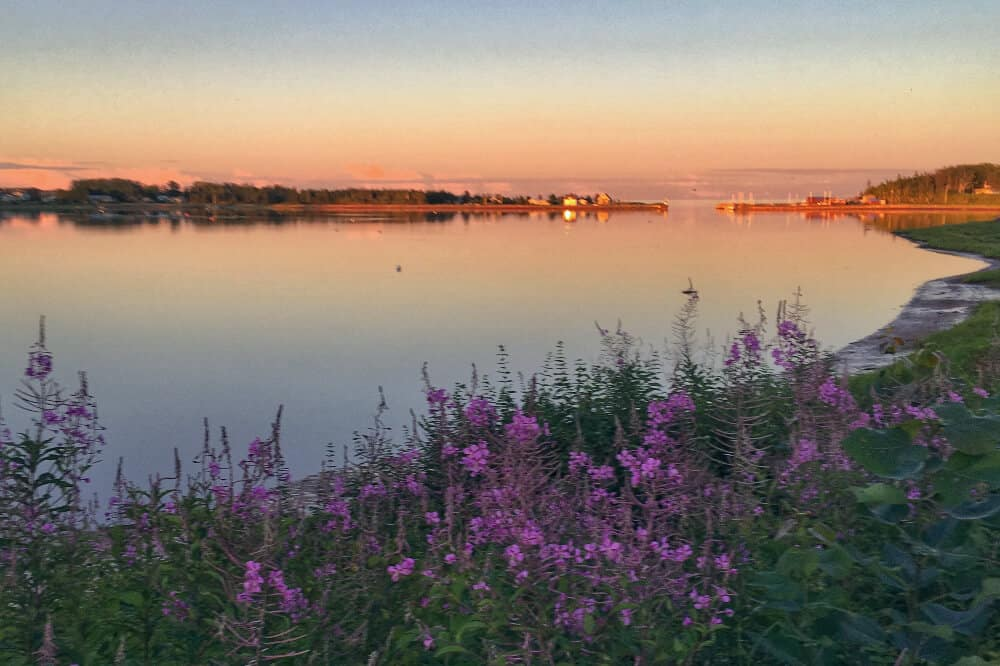 View of flowers, bay and sunset at from Inn at Bay Fortune, PEI, Canada