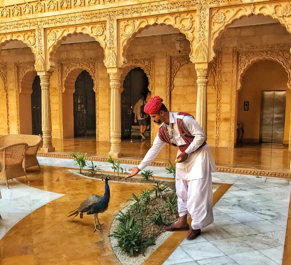 a best hotel in India, man feeding peacock at Suryagarh, Jaisalmer