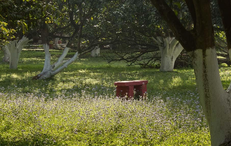 Bench in a meadow at Aurovalley Ashram