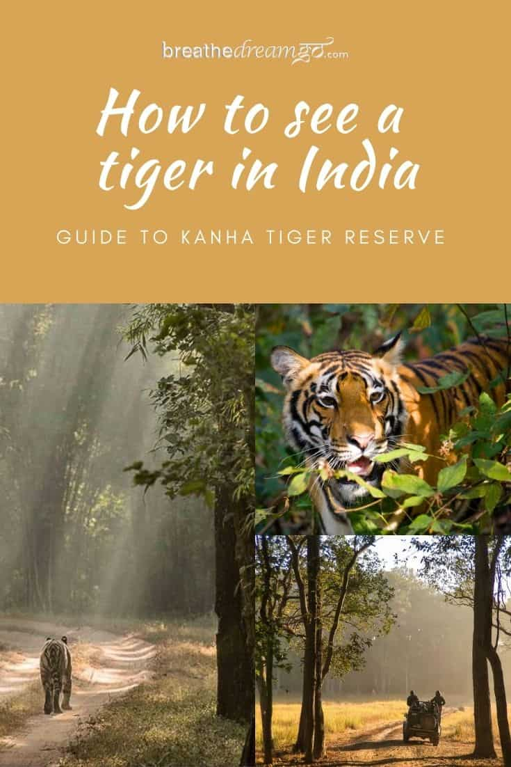 Tigers in Kanha park India