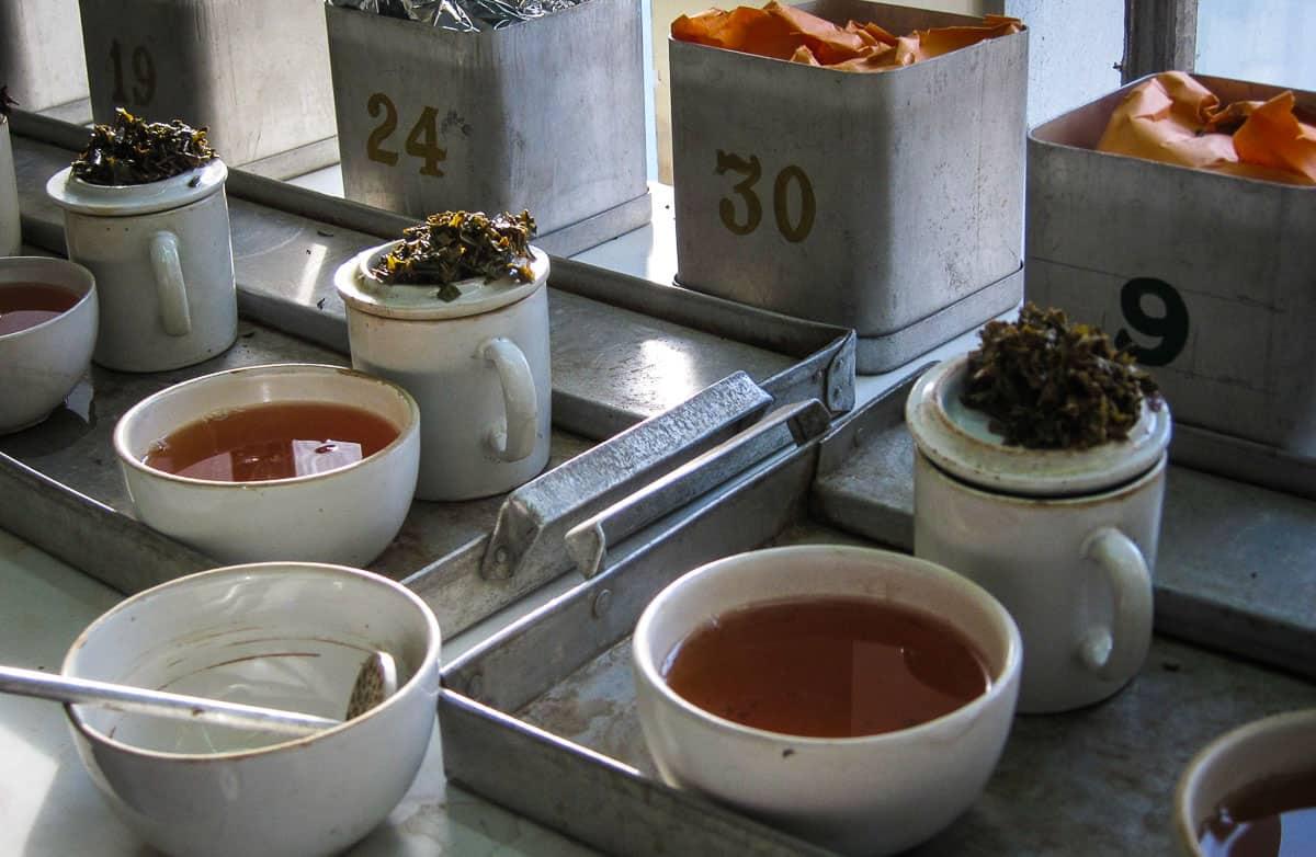 Tea in Darjeeling