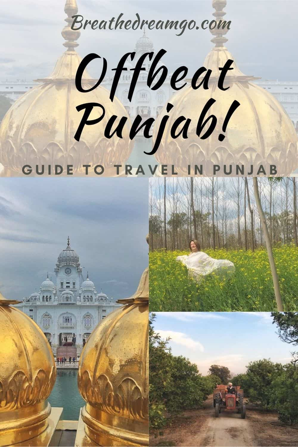 Offbeat Punjab Guide to golden temple, mustard fields, farms