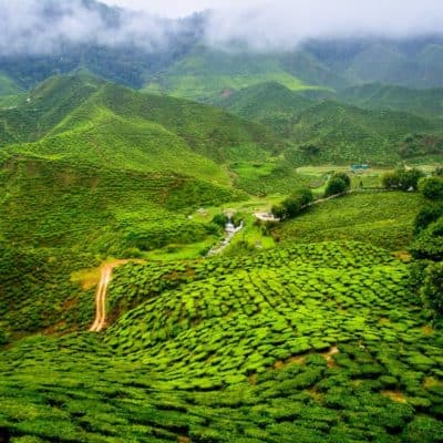 Discovering the true nature of tea in Darjeeling