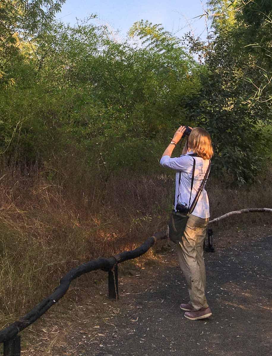 MW Satpura Tiger Reserve