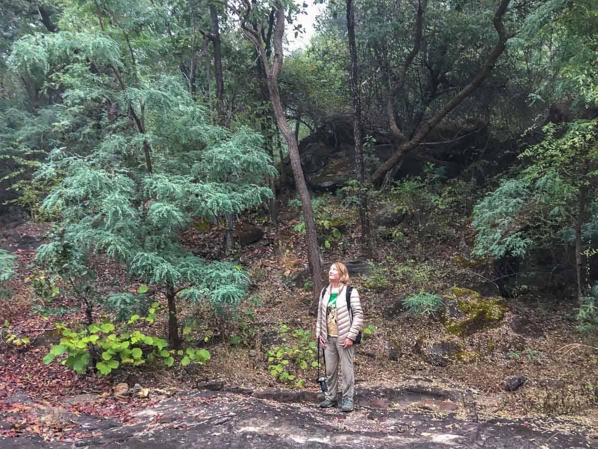 MW in Satpura Tiger Reserve