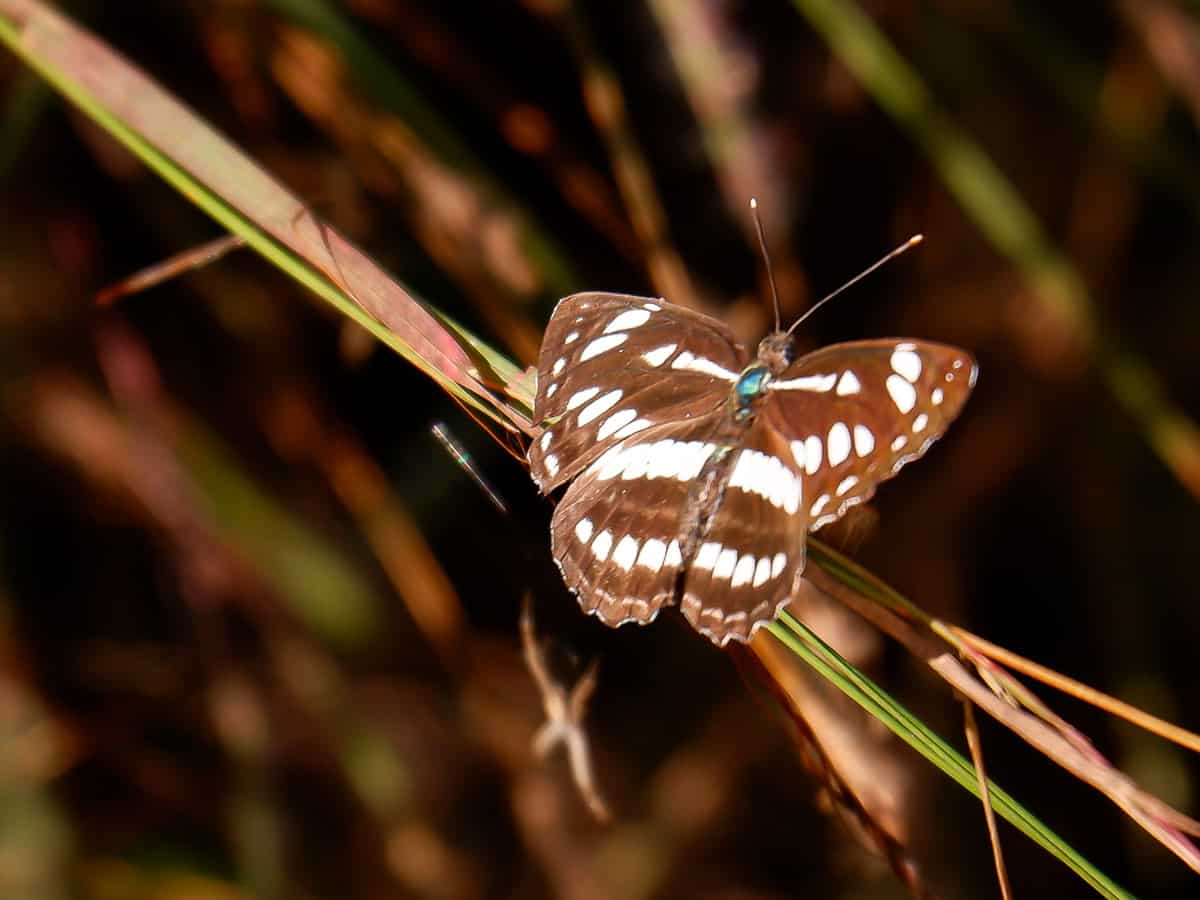 butterfly Satpura Tiger Reserve