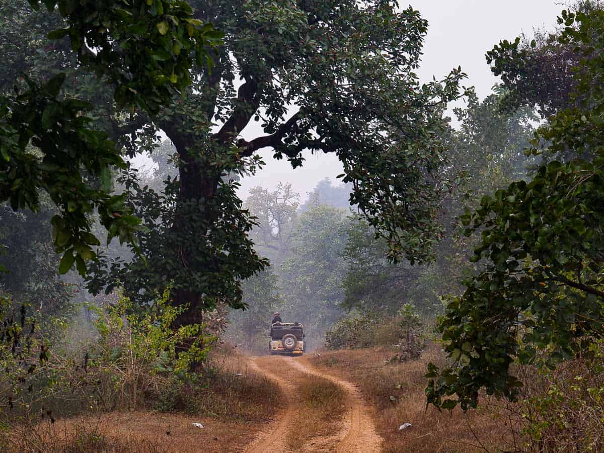 Satpura Tiger Reserve wildlife safari with jeep