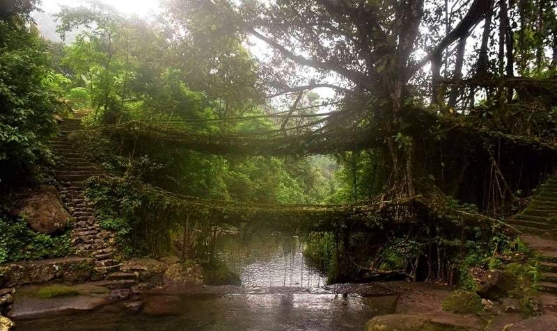 Root Bridge in Nongriat, India in monsoon