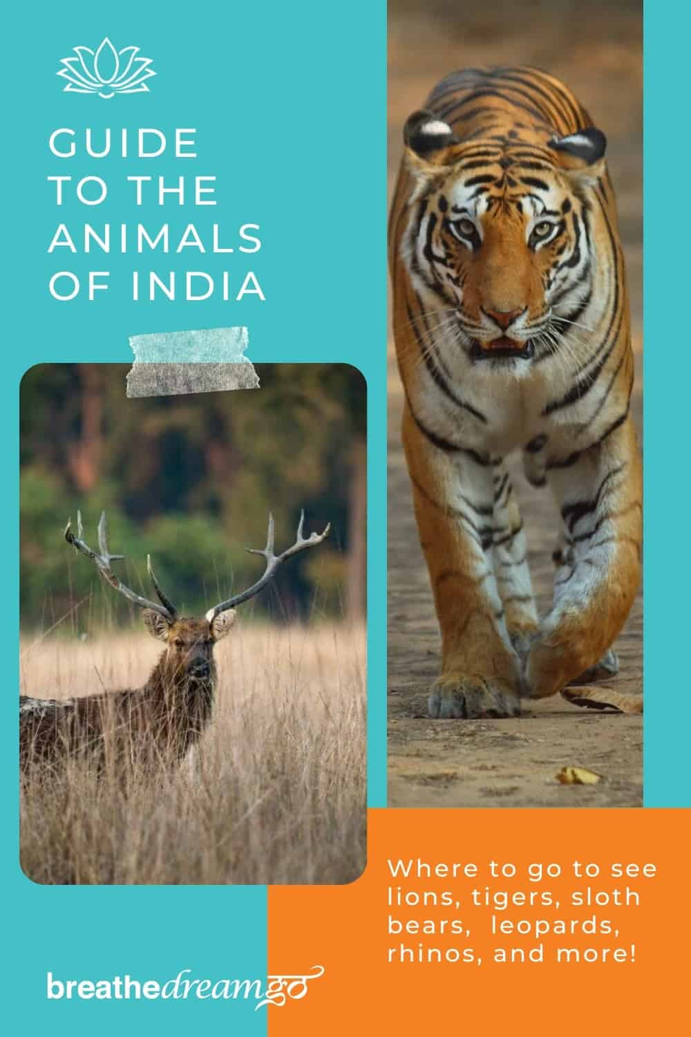 Guide to the animals of India